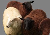 VHS-Kurs: Wie schere ich ein Schaf? Schafschur als Erlebnis @ UNSER HOF Freienhagen